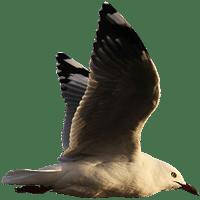vuelo de las aves
