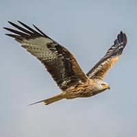 aves en vuelo-3