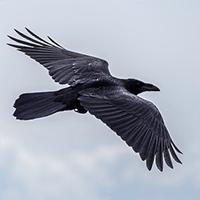 aves en vuelo-2