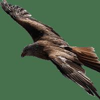 aves en vuelo-4