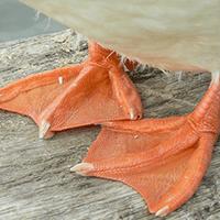 patas-acuaticas
