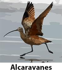 Alcaravanes