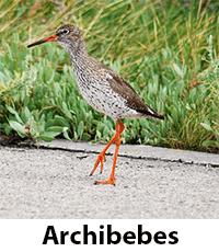 Archibebes