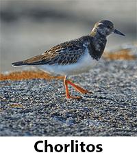 Chorlitos