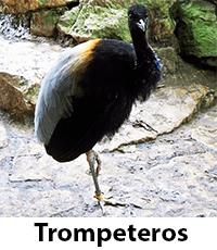 Trompeteros