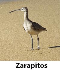 Zarapitos